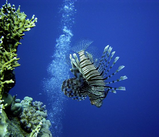 andy turner - lionfish- foreign waters winner 2009